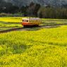 黄色の沿線