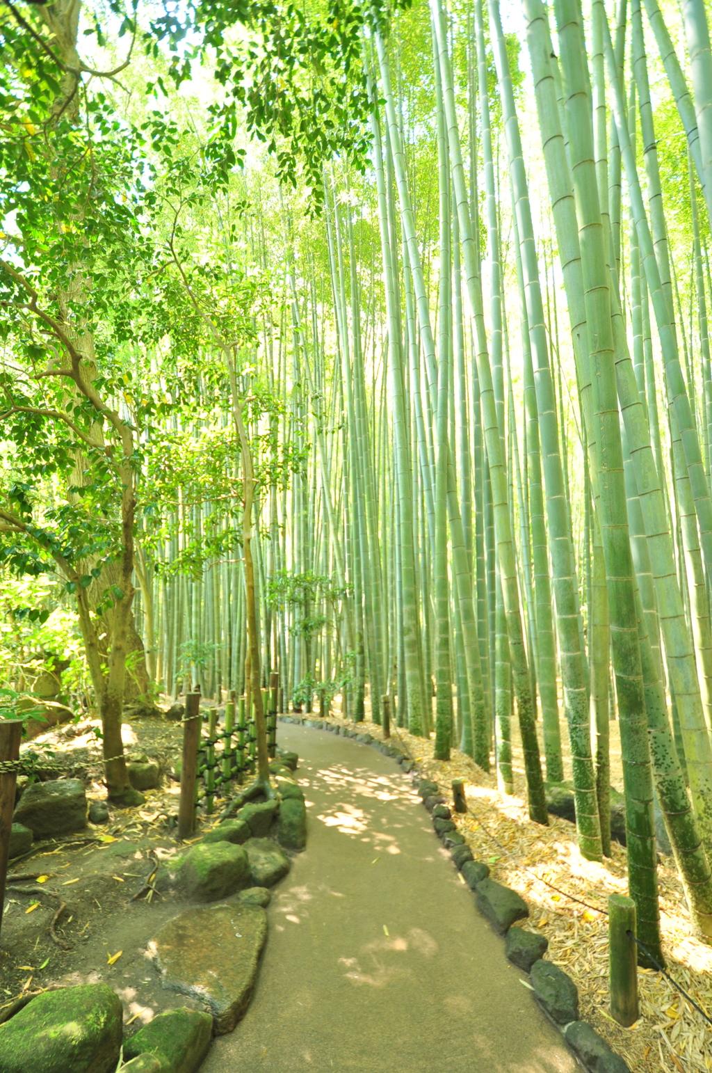鎌倉の竹林①