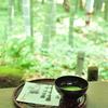 鎌倉の竹林②