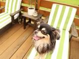 犬用ビーチベット