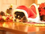 クリスマスになにを想う...
