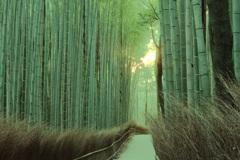 京 都  嵯 峨  竹林の道 2