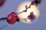 梅照らす月