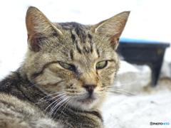 相島 猫の肖像