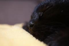 眠れ 良い子よ
