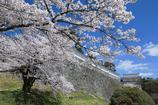 春爛漫二本松城