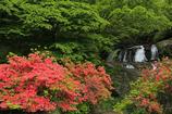 ツツジ咲く滝