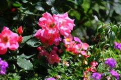最近花を撮るのが楽しい