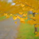 キャンパス通り…秋