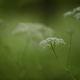 雨の森…6月