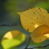 木漏れ日の中で…初秋