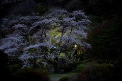 きみまち阪・・・春の宵