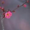 梅の花 香る季節に・・・