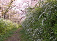NIKON NIKON D500で撮影した(春を見送って…)の写真(画像)