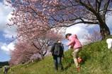 桜の木の下で ♪