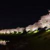 みなみの夜桜景 ③