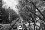 街路樹 ①