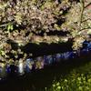 みなみの夜桜景 ⑩