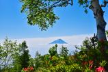 白樺下の富士山