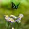 アゲハ蝶のオアシス