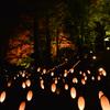 竹灯籠と紅葉