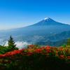 ツツジ富士