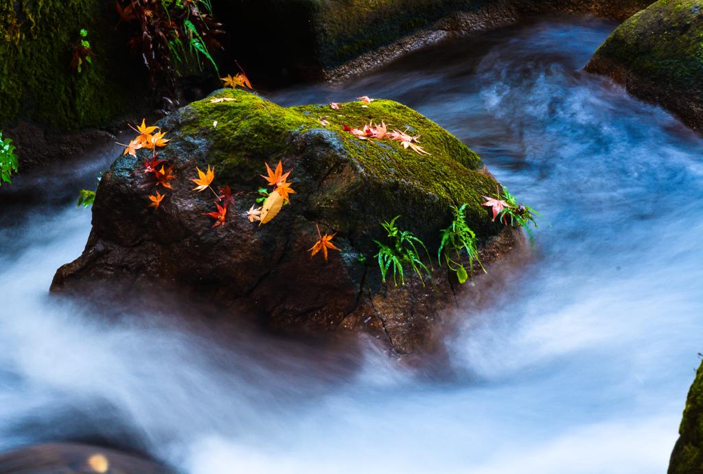 激流に浮かぶ紅葉