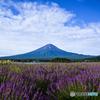 ラベンダーの香りに包まれる富士山