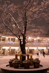 雪色の木1
