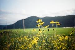 記憶色の花