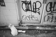 野良猫in 渋谷