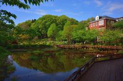薬師池の木道
