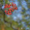 平林寺のまぶしい小枝