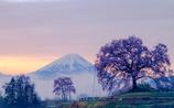 わに塚と富士