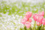 春の1ページ