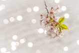 桜~memory~Ⅰ