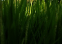 FUJIFILM X-A1で撮影した(夏)の写真(画像)