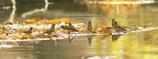 水辺の讃歌☆.。.:*・