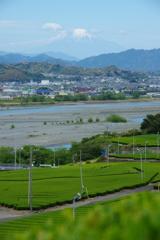 茶畑と大井川と富士山と