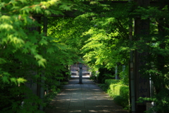 新緑の参道~石薬師寺~