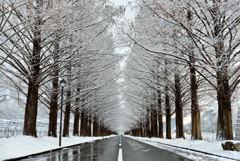 雪化粧の並木道