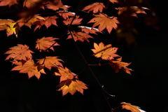 秋光に浮かぶ