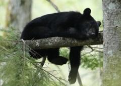 戸隠にて 番外 熊