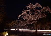 NIKON NIKON D7200で撮影した(突然の演出)の写真(画像)