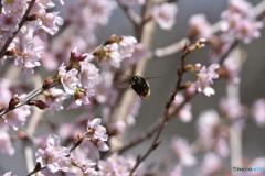 花めぐりの季節