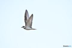 自由に飛ぶ