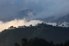 新緑の竹田城跡