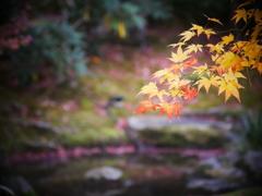 紅葉 with 池