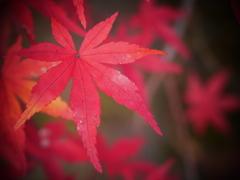 紅葉の全貌