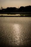 Water the fields